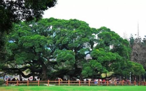 关于福州榕树的神秘故事,知道3个算你丫霸!