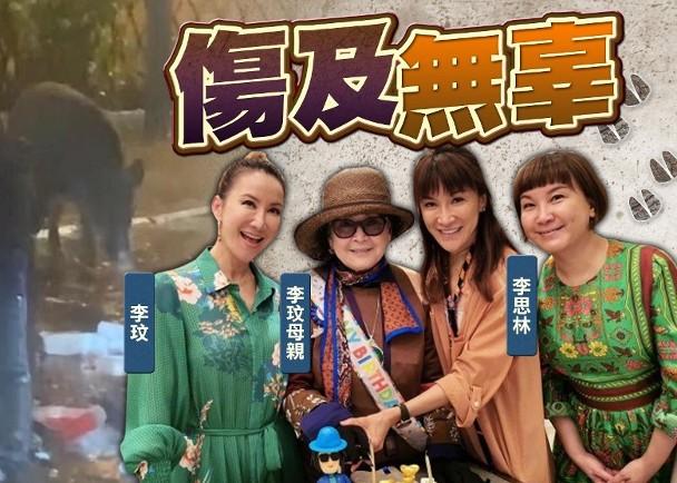 香港市区野猪出没 歌手李玟母亲被袭击致多处骨折_图1-3