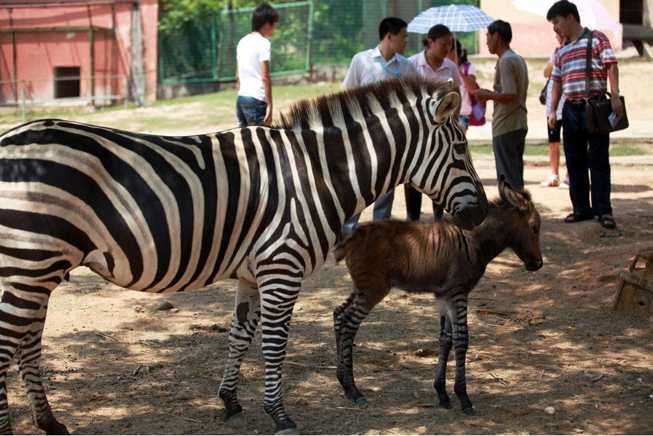 北京时间7月3日中午,福建省厦门市海沧野生动物园
