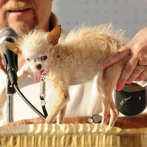 世上最丑陋的狗 于加州去世图片