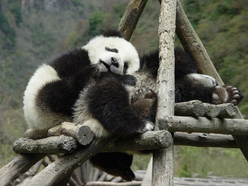世界睡眠日:实拍动物的可爱睡姿(组图)
