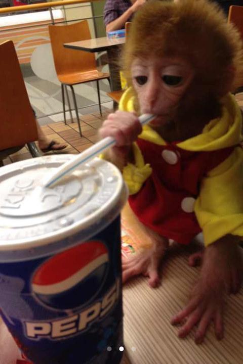 猴)全套萌照 洗澡抽烟亲吻主人(图)-大街上溜老虎吓傻路人 宠物图片