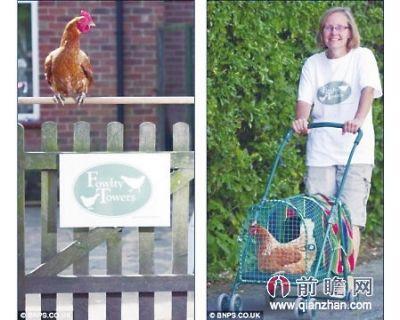 英国现五星级母鸡旅馆