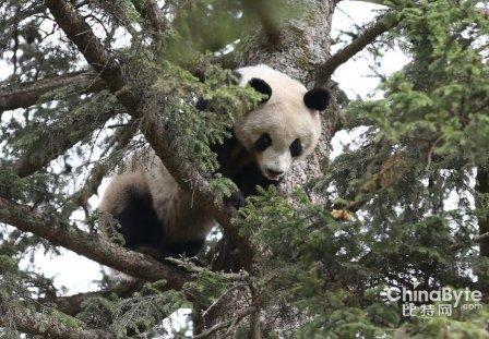 大熊猫逛县城 全球最奇异的动物大盘点