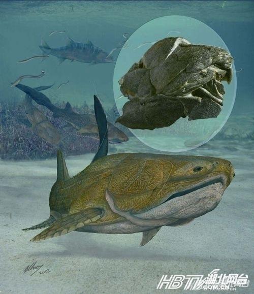 死亡抹香鲸爆炸内脏黏质物喷涌而出 鲜为人知的最老奇异生物盘点
