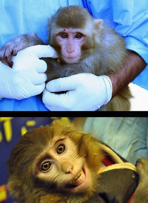 用太空泥捏猴子图解_脸上的猴子图解