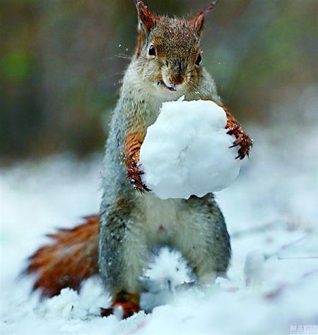 小松鼠堆雪人萌萌哒