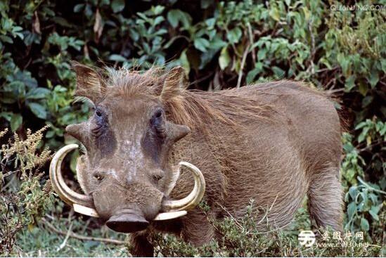 动物世界十大最丑动物