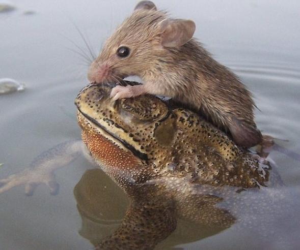 动物盘点:动物世界里也有不少爱偷懒的家伙,虽然它们不像人类出门
