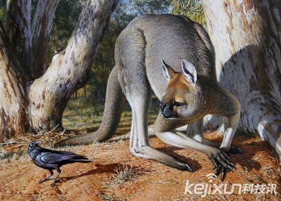 6,史前袋鼠:袋鼠是非常可爱的动物,尤其是幼鼠是在育儿袋中成长