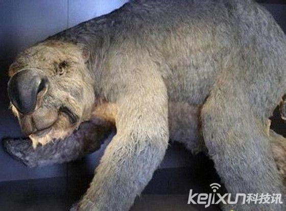 盘点:动物世界十大远古动物祖先 恐颌猪曾嗜杀成性【图】