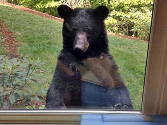 小伙工作发现自己竟然被黑熊虎视眈眈的监视!