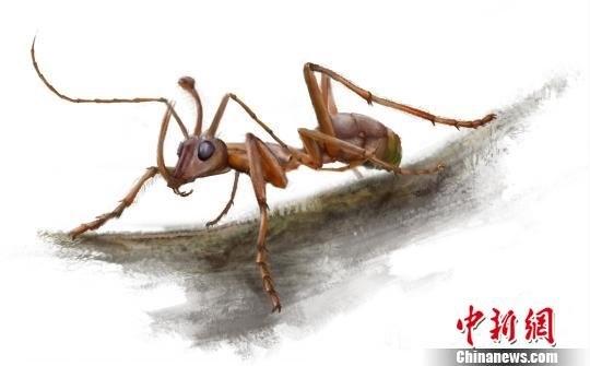 中国发现亿年前独角蚁 头长犄角惊呆专家