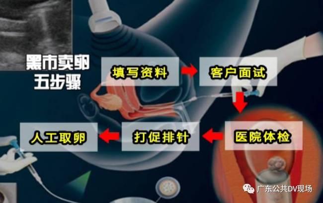 广州卖卵黑市:少女卖卵一次赚1.5万 有人差点丢命_图3-12