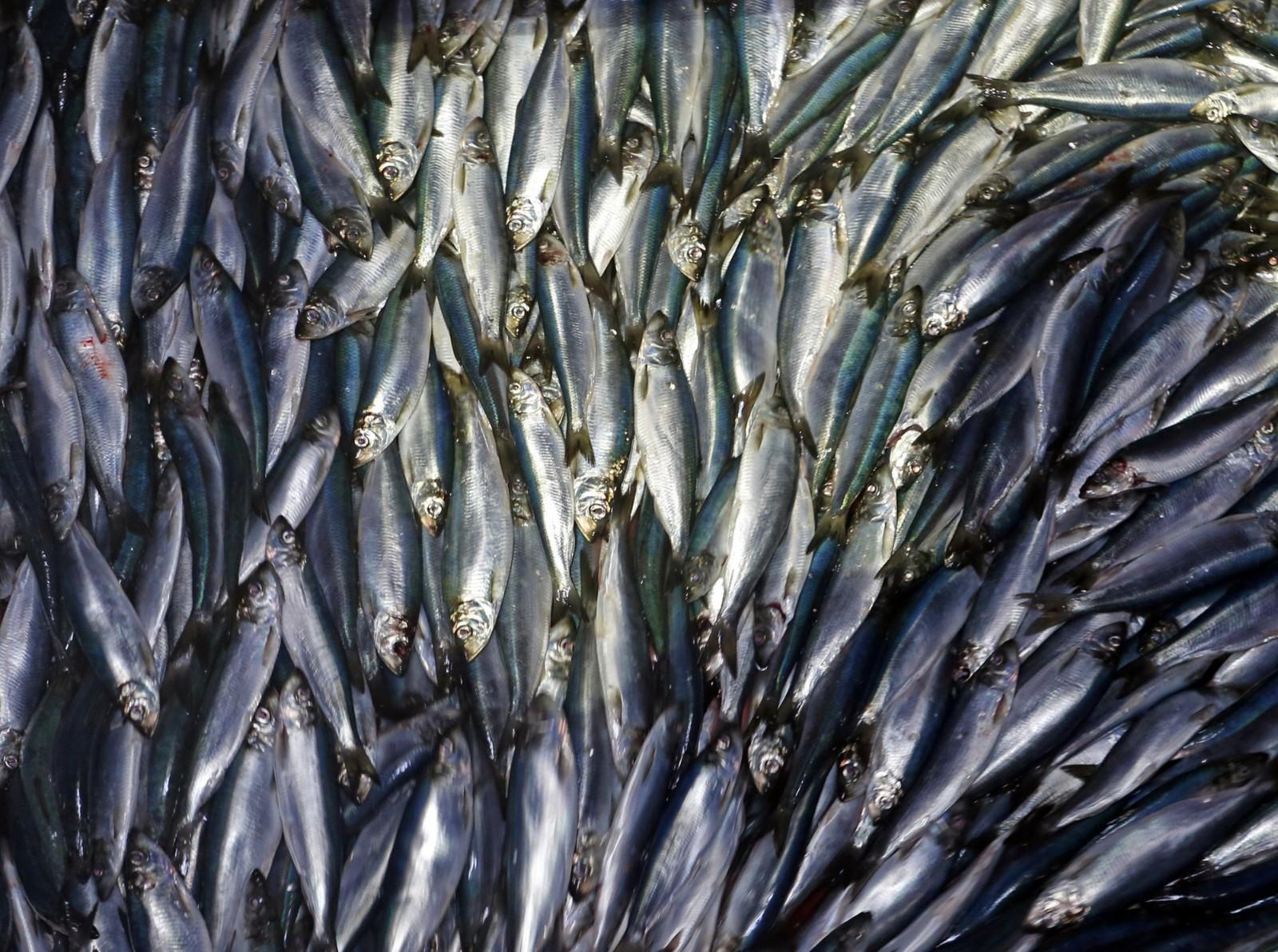 最新研究称气候变暖将使海洋鱼类减少近2成 危及人类生计_图1-1