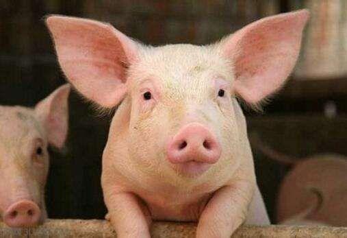 全国猪肉价格一览表