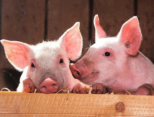 统计局谈猪肉价格下降