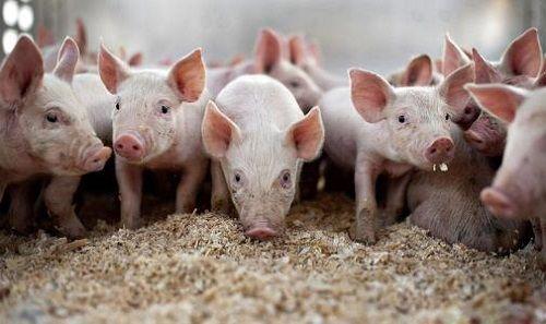 生猪期货概念股