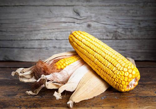 2021年玉米价格最新行情
