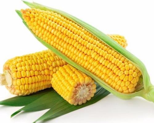 玉米价格行情走势