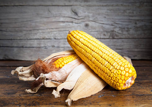 玉米价格最新行情2021