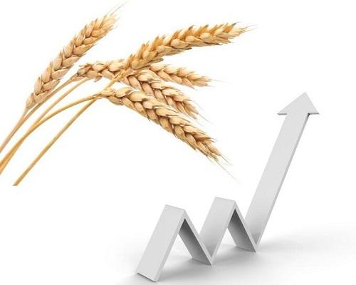 现在小麦的价格